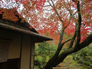 環水庵と紅葉