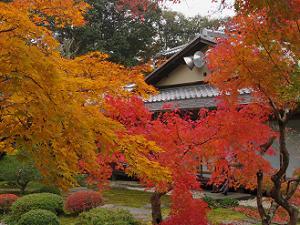 紅葉と書院
