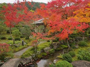 紅葉と水の流れ