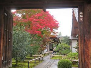興臨院の参道の紅葉