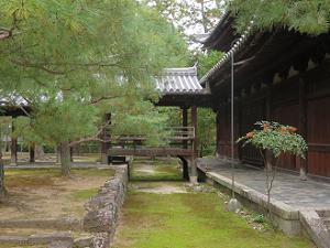 仏殿裏の松