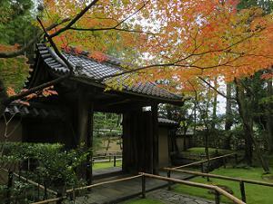 高桐院の表門付近の紅葉