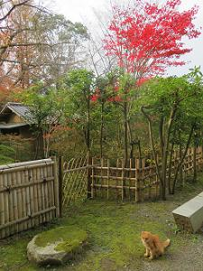 鳩峯庵と紅葉