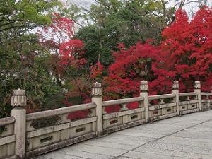 円通橋から見る紅葉