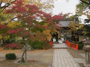神橋付近の紅葉