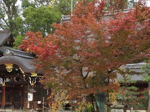 紅葉と本殿