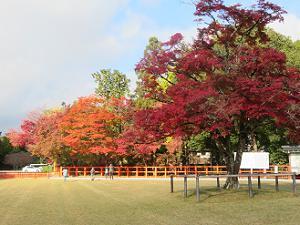 神馬舎付近の紅葉