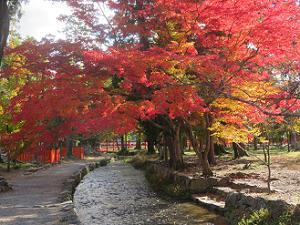 ならの小川と紅葉