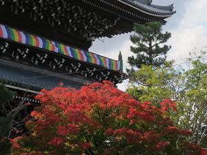 紅葉越しに見る山門