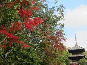 紅葉と三重塔
