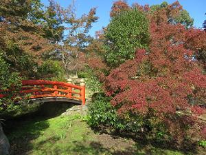 反り橋と紅葉