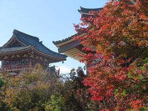紅葉と城の屋根