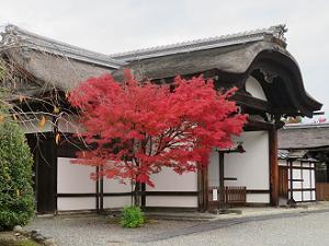 紅葉と大玄関