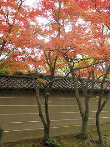 塀際の紅葉