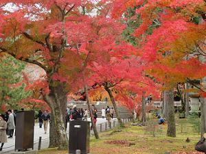 勅使門付近の紅葉