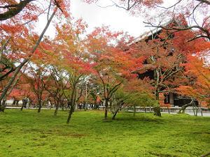 苔と紅葉と三門