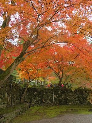 法堂裏の紅葉