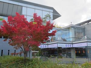カフェレストラン近くの紅葉