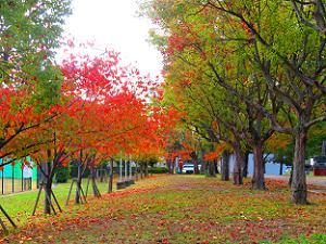 グラウンド近くの紅葉