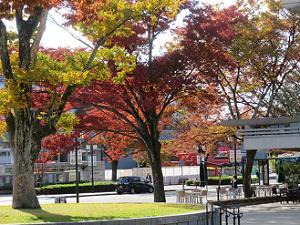 日差しを浴びた木々の葉