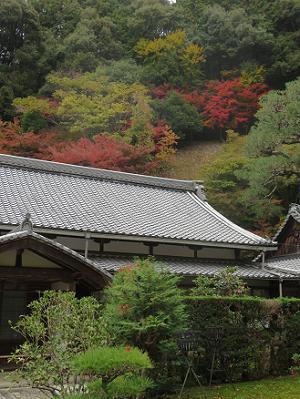 南禅寺山の紅葉