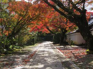 参道南側の紅葉