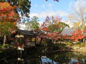 池周囲の紅葉
