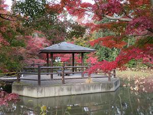 はす池の東屋と紅葉
