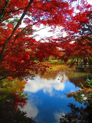 はす池と紅葉