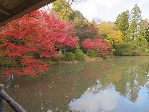 東屋から眺める紅葉