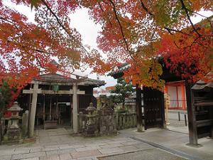 紅葉と山門と鳥居