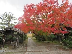 手水屋近くの紅葉