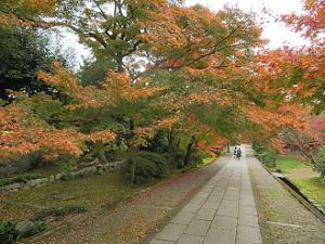 見下ろす参道の紅葉