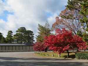 京都御所の塀と紅葉