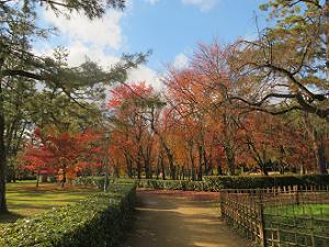 近衛邸跡近くの紅葉