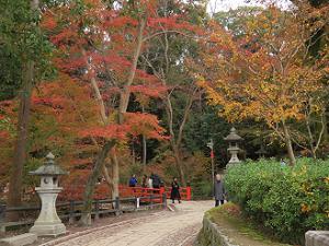 啼鳥菴付近の紅葉