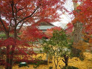 紅葉とイチョウのじゅうたん