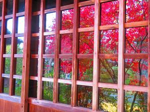 ガラスに映る紅葉