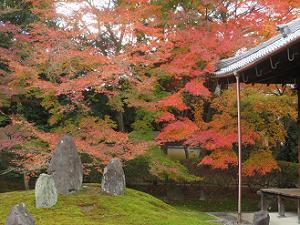 波心の庭の南側の紅葉