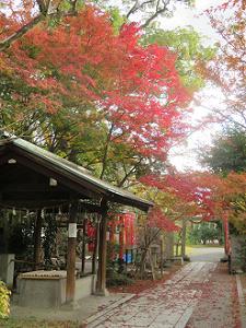 手水屋と紅葉