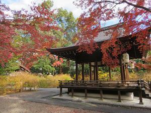 紅葉と拝殿