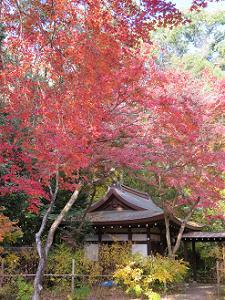 社殿と紅葉