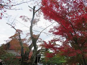 本堂西側の紅葉