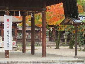 拝殿越しに見る紅葉