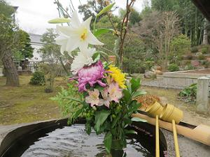 手水鉢の花