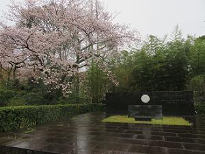 エジソン記念碑と桜