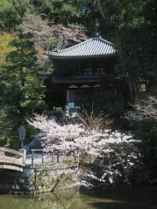 納骨堂とソメイヨシノ