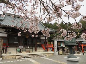 桜と本師堂
