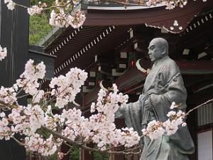 桜と日蓮聖人