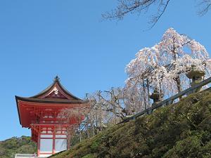 仁王門と枝垂れ桜